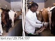 Купить «African American farmer milking goats», фото № 29754197, снято 15 декабря 2018 г. (c) Яков Филимонов / Фотобанк Лори