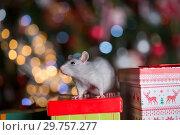 Купить «Gray rat with gifts on the background of the Christmas tree», фото № 29757277, снято 19 января 2019 г. (c) Типляшина Евгения / Фотобанк Лори