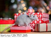 Купить «Gray rat with gifts on the background of the Christmas tree», фото № 29757285, снято 19 января 2019 г. (c) Типляшина Евгения / Фотобанк Лори