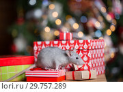 Купить «Gray rat with gifts on the background of the Christmas tree», фото № 29757289, снято 19 января 2019 г. (c) Типляшина Евгения / Фотобанк Лори