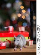 Купить «Gray rat with gifts on the background of the Christmas tree», фото № 29757293, снято 19 января 2019 г. (c) Типляшина Евгения / Фотобанк Лори