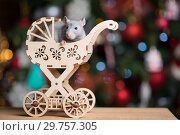 Купить «Gray rat symbol of the new year», фото № 29757305, снято 19 января 2019 г. (c) Типляшина Евгения / Фотобанк Лори