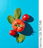 Купить «Fresh spinach leaves and juicy ripe tomatoes on a blue background with hard shadows and copy space. Organic vegetables for salad. Flat lay», фото № 29767745, снято 16 апреля 2018 г. (c) Ярослав Данильченко / Фотобанк Лори