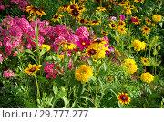 Купить «Клумба с красивыми садовыми цветами летним днем», фото № 29777277, снято 8 августа 2018 г. (c) Елена Коромыслова / Фотобанк Лори