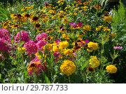 Купить «Клумба с яркими садовыми цветами летним днем», фото № 29787733, снято 10 августа 2018 г. (c) Елена Коромыслова / Фотобанк Лори