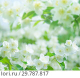 Купить «Spring floral background», фото № 29787817, снято 18 июня 2018 г. (c) Икан Леонид / Фотобанк Лори