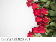 Купить «close up of red roses on white background», фото № 29820701, снято 8 февраля 2018 г. (c) Syda Productions / Фотобанк Лори