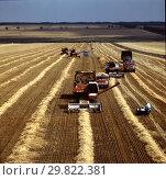 Купить «Уборка хлеба в Ростовской области», фото № 29822381, снято 11 июля 2020 г. (c) Борис Кавашкин / Фотобанк Лори