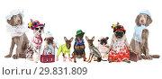 Купить «Group of dogs dressed in clothes», фото № 29831809, снято 3 ноября 2018 г. (c) Алексей Кузнецов / Фотобанк Лори