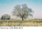 Купить «Огромная ива на большом осеннем поле высохшей травы, в качестве фона», фото № 29850413, снято 26 октября 2018 г. (c) Круглов Олег / Фотобанк Лори