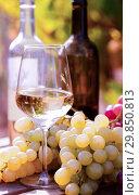 Купить «glasses of red and white wine and ripe grapes on table in vineyard», фото № 29850813, снято 21 февраля 2020 г. (c) Татьяна Яцевич / Фотобанк Лори