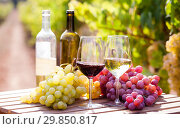 Купить «still life with glasses of red and white wine and grapes in field of vineyard», фото № 29850817, снято 16 февраля 2019 г. (c) Татьяна Яцевич / Фотобанк Лори