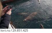 Купить «Девушка фотографирует на смартфон сивучей, плавающих в море», видеоролик № 29851425, снято 4 февраля 2019 г. (c) А. А. Пирагис / Фотобанк Лори