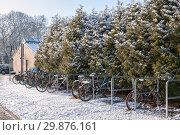 В Гамбурге выпал снег и засыпал дорожки, велосипеды и зеленые растения искрящимися на солнце кристаллами (2019 год). Стоковое фото, фотограф Наталья Николаева / Фотобанк Лори