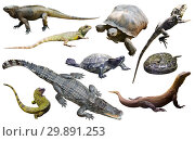 Купить «reptiles isolated on white», фото № 29891253, снято 20 октября 2019 г. (c) Яков Филимонов / Фотобанк Лори