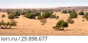 Купить «Sand dunes and trees in Sahara desert», фото № 29898677, снято 13 февраля 2018 г. (c) Михаил Коханчиков / Фотобанк Лори