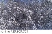 Купить «Beautiful snow winter forest, slider dolly shot», видеоролик № 29909761, снято 17 января 2019 г. (c) Михаил Коханчиков / Фотобанк Лори