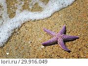 Starfish on the sand. Стоковое фото, фотограф Николай Куницкий / Фотобанк Лори
