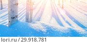 Купить «Winter landscape with birch trunks in the snowdrifts», фото № 29918781, снято 20 января 2019 г. (c) Икан Леонид / Фотобанк Лори