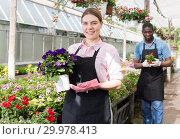 Купить «Female worker checking flowers in glasshouse», фото № 29978413, снято 19 апреля 2018 г. (c) Яков Филимонов / Фотобанк Лори