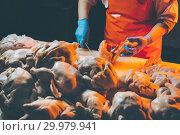 Купить «chicken meat production», фото № 29979941, снято 7 февраля 2019 г. (c) Mark Agnor / Фотобанк Лори