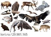 Купить «Set of fauna of North American animals.», фото № 29981165, снято 24 марта 2019 г. (c) Яков Филимонов / Фотобанк Лори