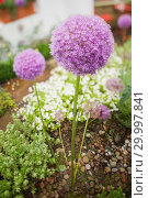 Купить «Purple flower», фото № 29997841, снято 24 июля 2012 г. (c) Wavebreak Media / Фотобанк Лори