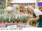 Купить «Smiling florist looking at clay pots», фото № 29997905, снято 24 июля 2012 г. (c) Wavebreak Media / Фотобанк Лори
