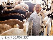 Купить «Man milking goats on farm», фото № 30007337, снято 15 декабря 2018 г. (c) Яков Филимонов / Фотобанк Лори