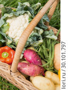 Купить «Basket of fresh organic veg», фото № 30101797, снято 11 ноября 2014 г. (c) Wavebreak Media / Фотобанк Лори