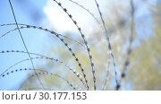 Купить «Prison landscape with barbed wire (fence) against the background of birches and sky», видеоролик № 30177153, снято 23 февраля 2019 г. (c) Mikhail Erguine / Фотобанк Лори