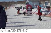 """Купить «Детская гонка на собачьих упряжках """"Дюлин"""" (""""Берингия"""")», видеоролик № 30178417, снято 21 февраля 2019 г. (c) А. А. Пирагис / Фотобанк Лори"""