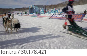 """Купить «Детская гонка на собачьих упряжках """"Дюлин"""" (""""Берингия"""")», видеоролик № 30178421, снято 21 февраля 2019 г. (c) А. А. Пирагис / Фотобанк Лори"""
