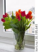 Красные тюльпаны в стеклянной прозрачной вазе, стоящей на подоконнике. Стоковое фото, фотограф Наталья Николаева / Фотобанк Лори