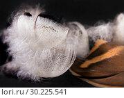 Утиные перья на черном фоне. Стоковое фото, фотограф Румянцева Наталия / Фотобанк Лори
