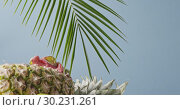 Купить «Evergreen palm leaves with natural exotic fruits composition on a wooden table on a blue background. Vertical panoramic downward motion 4K UHD video, 3840, 2160p.», видеоролик № 30231261, снято 4 июля 2018 г. (c) Ярослав Данильченко / Фотобанк Лори