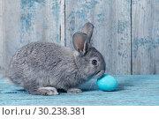 Купить «Easter egg with bunny on blue old wooden background», фото № 30238381, снято 12 мая 2018 г. (c) Майя Крученкова / Фотобанк Лори