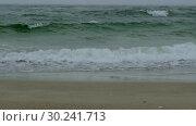 Купить «Rough sea with snow storm. Winter sea storm wave strikes the sandy coast. Coastal seascape», видеоролик № 30241713, снято 8 августа 2018 г. (c) Некрасов Андрей / Фотобанк Лори