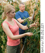 Купить «Woman with man cultivating tomatoes», фото № 30252221, снято 5 июля 2018 г. (c) Яков Филимонов / Фотобанк Лори