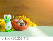 Купить «Easter festive background. Easter bunnies and Easter eggs in the nest near the mimosa flowers», фото № 30253113, снято 27 февраля 2018 г. (c) Зезелина Марина / Фотобанк Лори