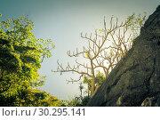 Купить «Tree silhouette against the sky, said trees. Philippine nature», фото № 30295141, снято 21 февраля 2019 г. (c) Евдокимов Максим / Фотобанк Лори