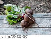Купить «Bunch of just harvested beet on wooden table», фото № 30323097, снято 18 октября 2018 г. (c) Короленко Елена / Фотобанк Лори