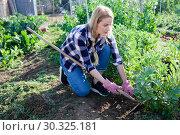 Купить «Young woman weeds with a hoe the garden bed», фото № 30325181, снято 28 февраля 2019 г. (c) Яков Филимонов / Фотобанк Лори