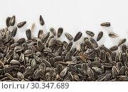 Купить «Sunflower black seeds on white background close up, nobody», фото № 30347689, снято 23 мая 2019 г. (c) Яков Филимонов / Фотобанк Лори
