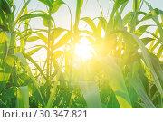 Summer landscape bright background. Стоковое фото, фотограф Kira_Yan / Фотобанк Лори