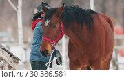 Купить «Winter time. A woman brush off the snow from her horse», видеоролик № 30386581, снято 23 июля 2019 г. (c) Константин Шишкин / Фотобанк Лори