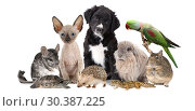 Large group of different animals. Стоковое фото, фотограф Алексей Кузнецов / Фотобанк Лори