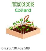 Microgreens Collard. Sprouts in a bowl. Sprouting seeds of a plant. Vitamin supplement, vegan food. Стоковая иллюстрация, иллюстратор Юлия Фаранчук / Фотобанк Лори