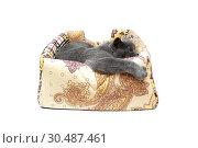 Купить «Gray cat lying in a lounger on a white background», фото № 30487461, снято 31 мая 2014 г. (c) Ласточкин Евгений / Фотобанк Лори