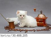 Купить «White British kitten and coffee», фото № 30488205, снято 18 декабря 2018 г. (c) Okssi / Фотобанк Лори